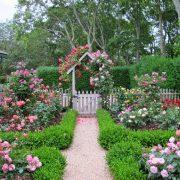 تکثیر انواع گل رز - آموزش تصویری قلمه زدن گل رز و روش ساده خواباندن در هوا