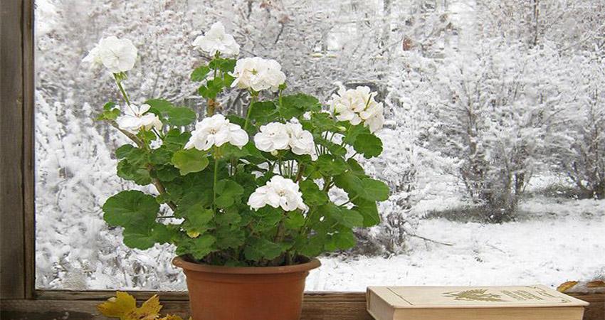 مراقبت از گیاهان در زمستان و پاییز
