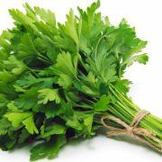 بذر سبزی جعفری با کیفیت - عمده و خرده