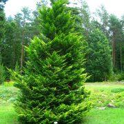 انواع درختان و درختچه های اب و هوا های مختلف