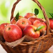 کاشت ، داشت ، و برداشت سیب درختی