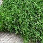 بذر شوید با کیفیت - عمده و خرده