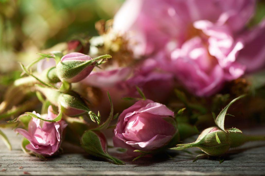 گل محمدی اصل را از ما بخواهید