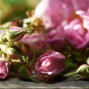 فواید و خواص دارویی گل محمدی