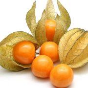 کاشت و پرورش میوه فیسالیس ( عروسک پشت پرده - گیلاس زمینی - تمشک زمینی )