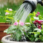 نحوه صحیح آبیاری انواع گل و گیاهان آپارتمانی و باغچه ای و کاکتوس ها در فصل های مختلف