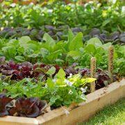 تمام نکات کاشت سبزی در گلدان و باغچه