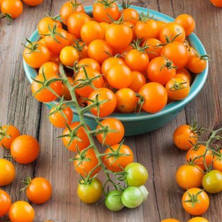 بذر گوجه چری زرد پرتقالی ایتالیایی – ۲۰ دانه درجه یک