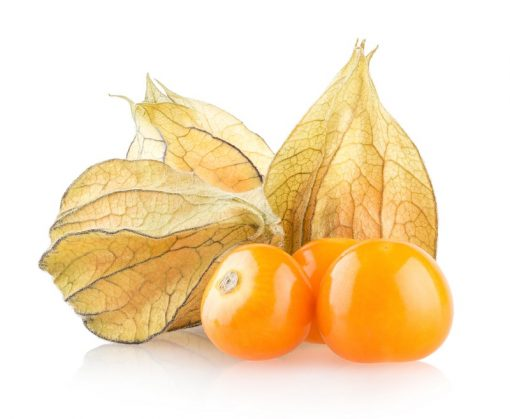 بذر فیسالیس نارنجی درجه یک - عمده و خرده