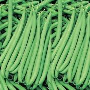 بذر لوبیا سبز خارجی – ۵۰ دانه باکیفیت
