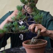 چگونه یک شاخه y شکل بونسا را سیم کشی نماییم