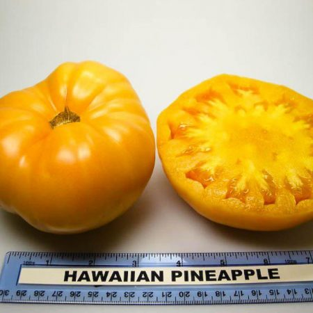 بذر گوجه آناناسی چروک زرد
