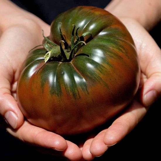 بذر گوجه بلک کریم – Black krim