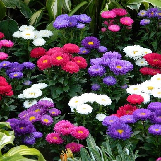 مینا پرپر پابلند در چند رنگ